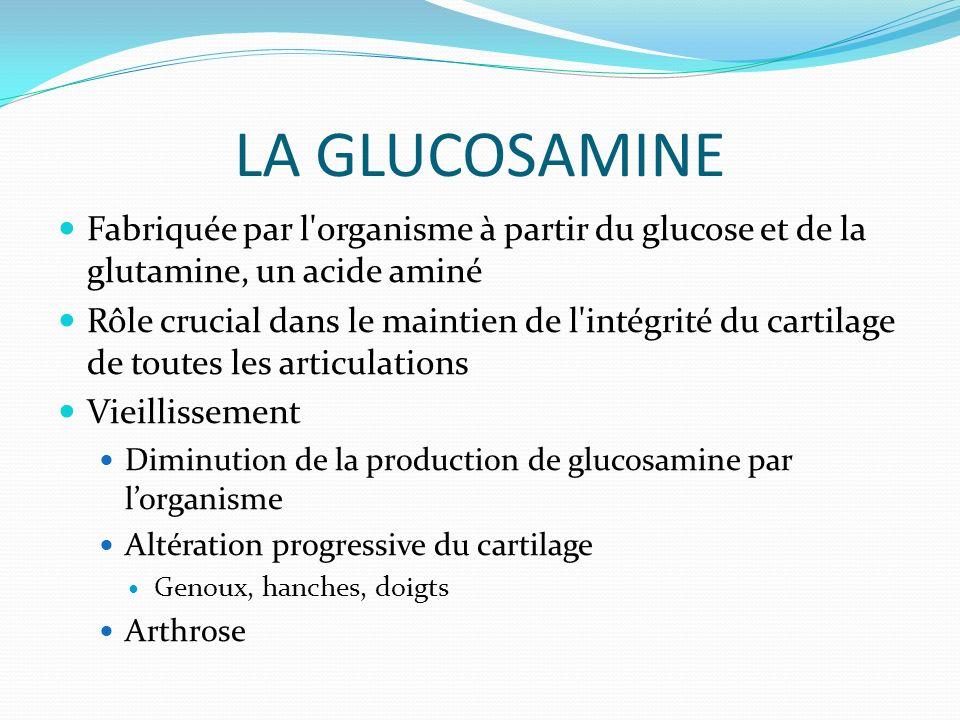 LA GLUCOSAMINE Fabriquée par l organisme à partir du glucose et de la glutamine, un acide aminé.