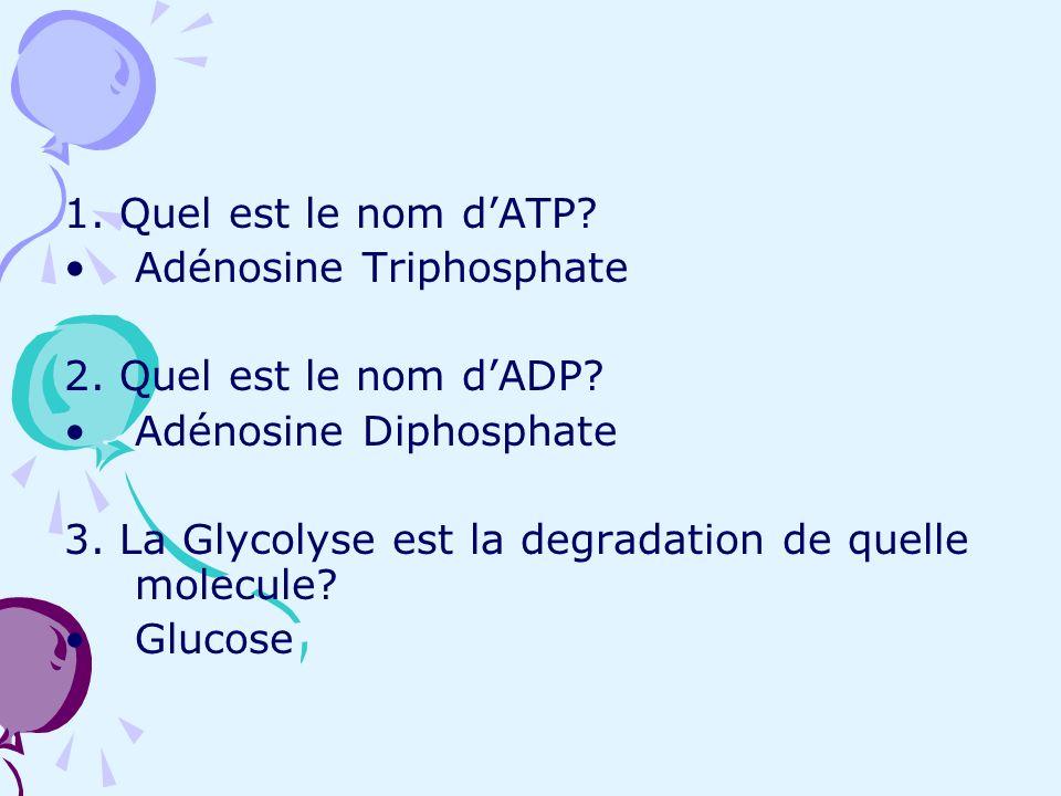 1. Quel est le nom d'ATP Adénosine Triphosphate. 2. Quel est le nom d'ADP Adénosine Diphosphate.