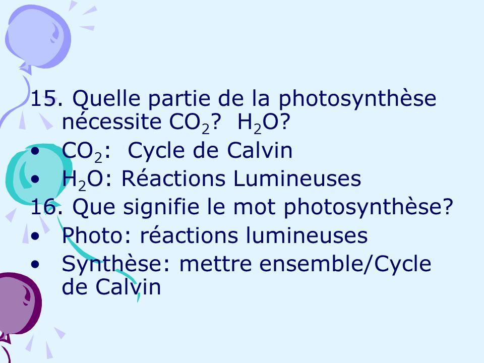 15. Quelle partie de la photosynthèse nécessite CO2 H2O