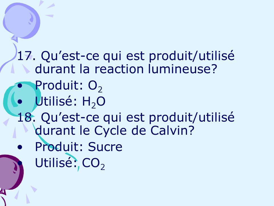17. Qu'est-ce qui est produit/utilisé durant la reaction lumineuse