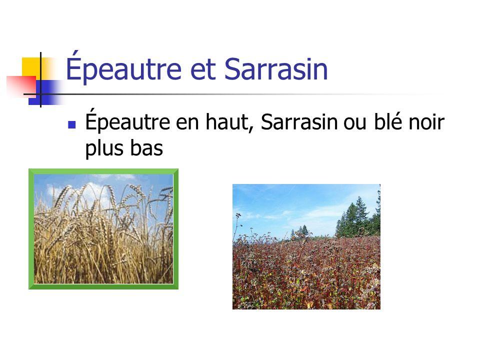 Épeautre et Sarrasin Épeautre en haut, Sarrasin ou blé noir plus bas