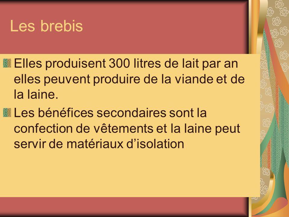 Les brebis Elles produisent 300 litres de lait par an elles peuvent produire de la viande et de la laine.