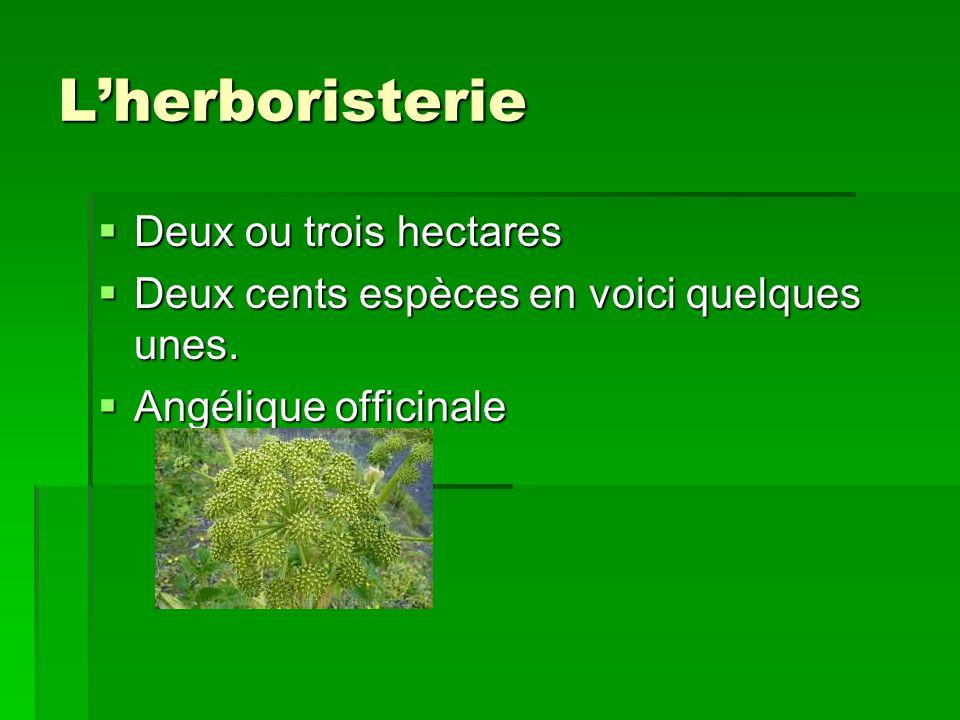 L'herboristerie Deux ou trois hectares