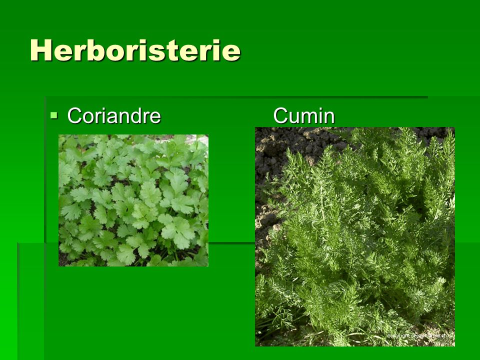 Herboristerie Coriandre Cumin
