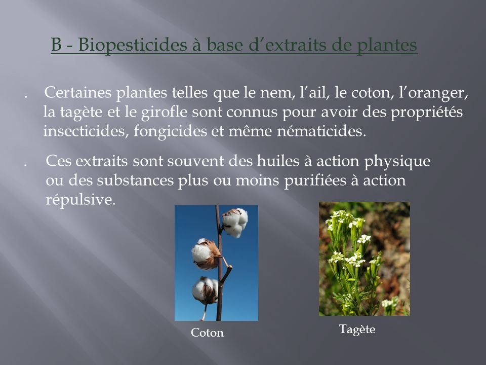 B - Biopesticides à base d'extraits de plantes