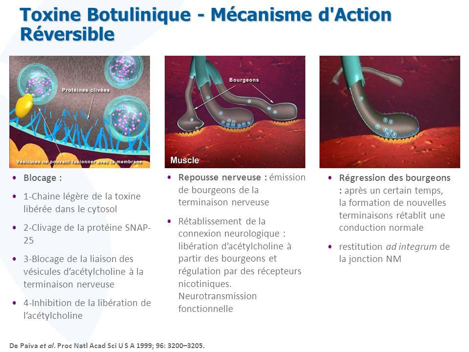 Toxine Botulinique - Mécanisme d Action Réversible