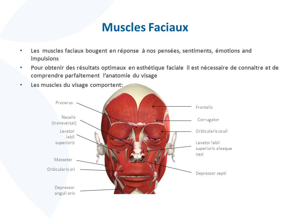 Muscles Faciaux Les muscles faciaux bougent en réponse à nos pensées, sentiments, émotions and impulsions.