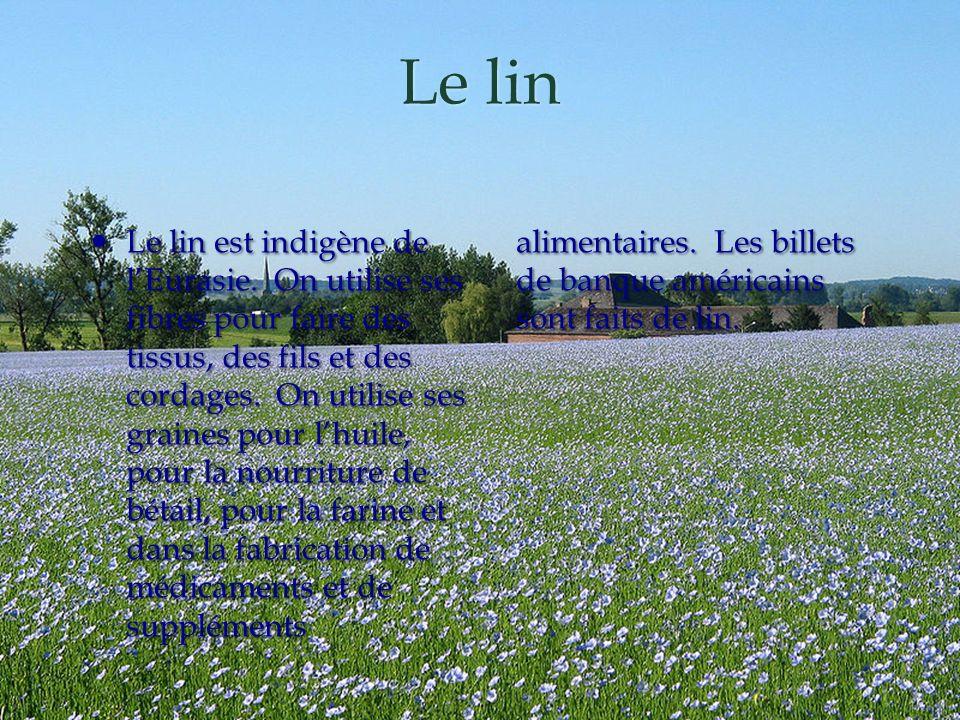 Le lin