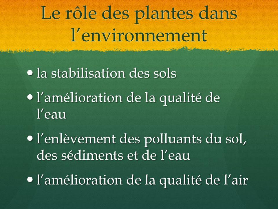 Le rôle des plantes dans l'environnement