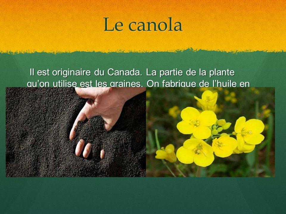 Le canola Il est originaire du Canada. La partie de la plante qu'on utilise est les graines.