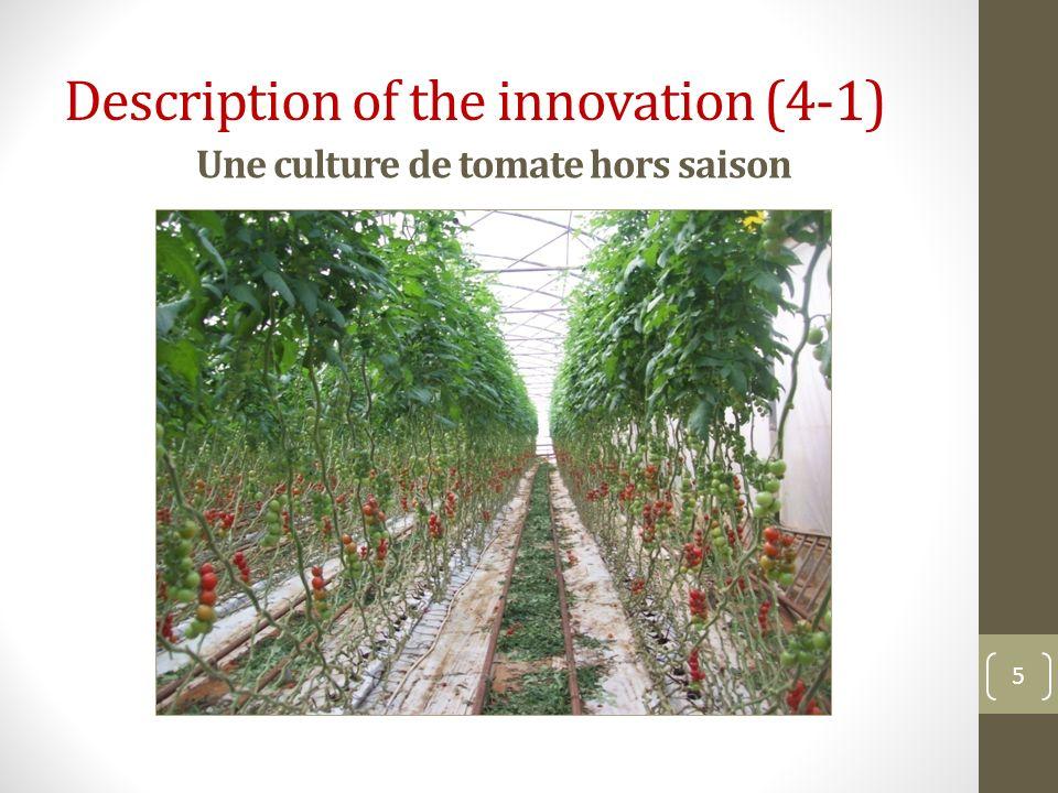 Une culture de tomate hors saison