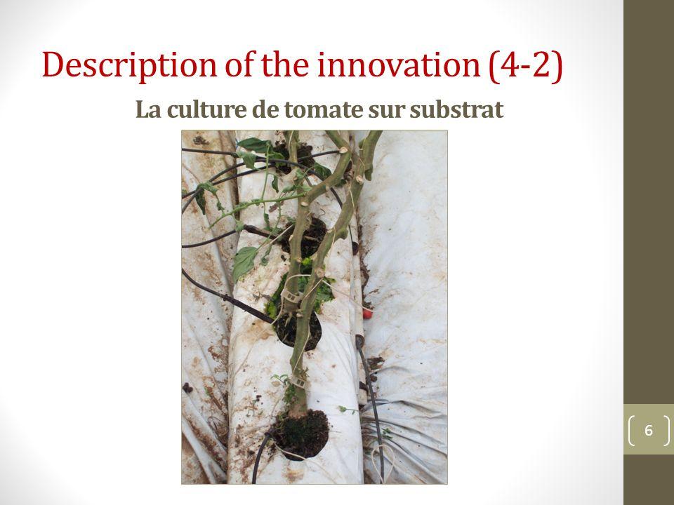 La culture de tomate sur substrat