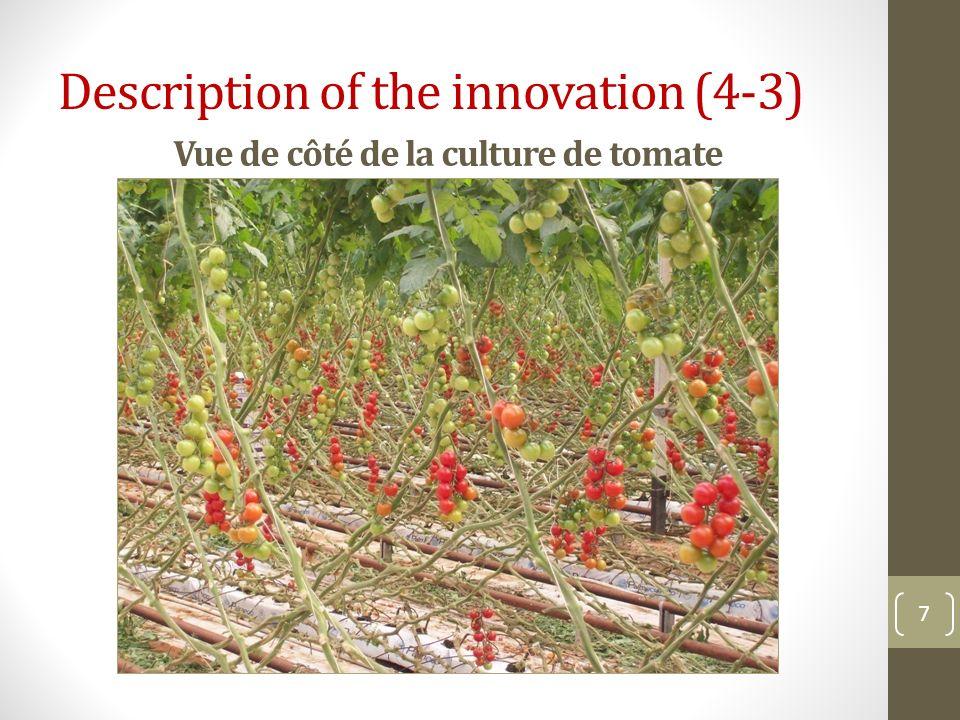 Vue de côté de la culture de tomate