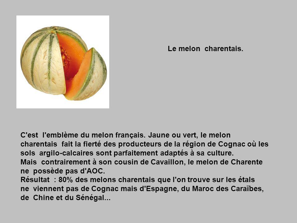 Le melon charentais.