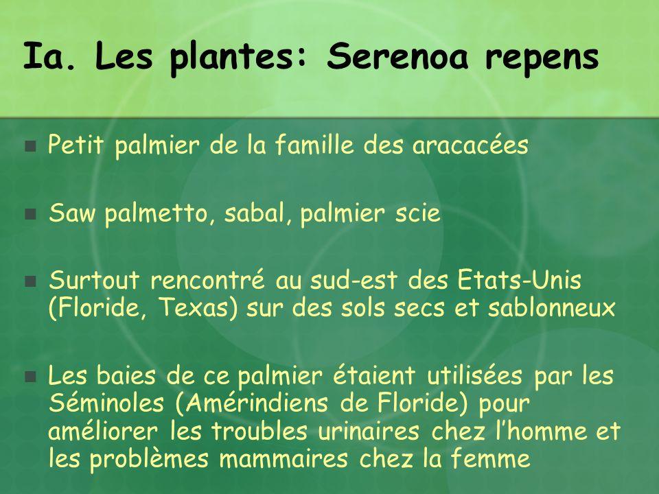 Ia. Les plantes: Serenoa repens