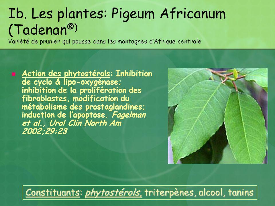 Ib. Les plantes: Pigeum Africanum (Tadenan®) Variété de prunier qui pousse dans les montagnes d'Afrique centrale