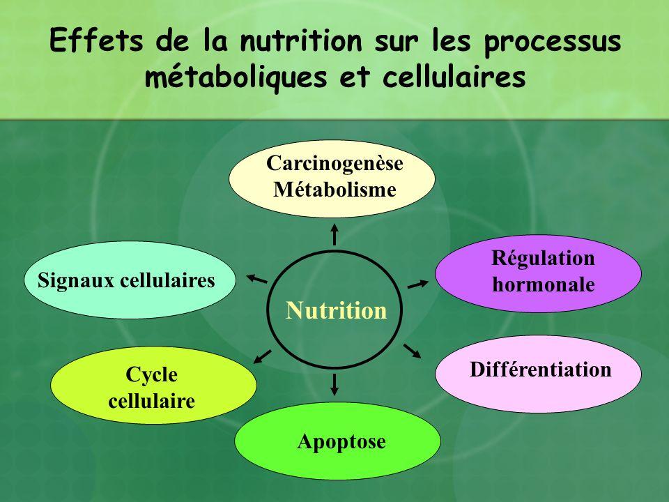 Effets de la nutrition sur les processus métaboliques et cellulaires
