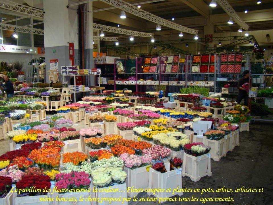 Le pavillon des fleurs annonce la couleur…Fleurs coupées et plantes en pots, arbres, arbustes et même bonzaïs, le choix proposé par le secteur permet tous les agencements.