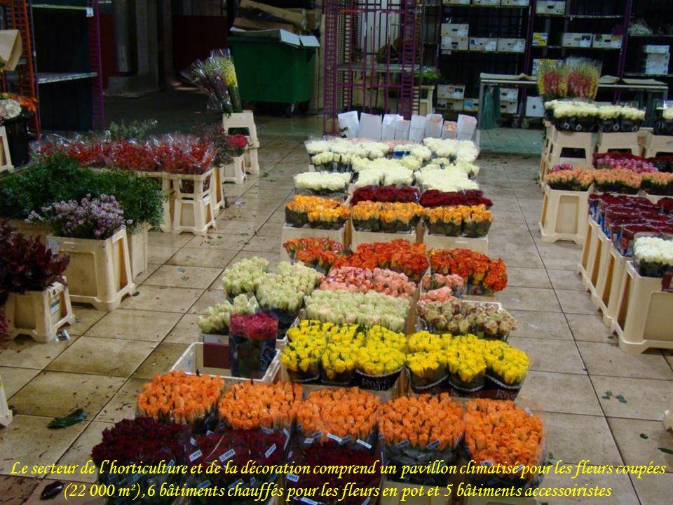 Le secteur de l'horticulture et de la décoration comprend un pavillon climatisé pour les fleurs coupées (22 000 m²) ,6 bâtiments chauffés pour les fleurs en pot et 5 bâtiments accessoiristes