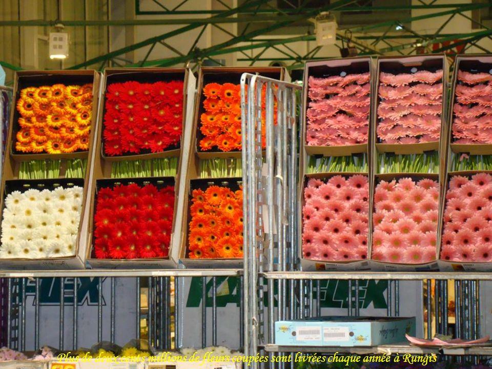 Plus de deux cents millions de fleurs coupées sont livrées chaque année à Rungis
