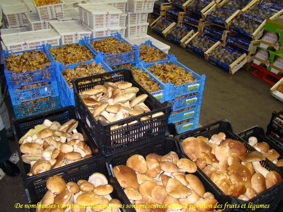 De nombreuses variétés de champignons sont présentées dans le pavillon des fruits et légumes