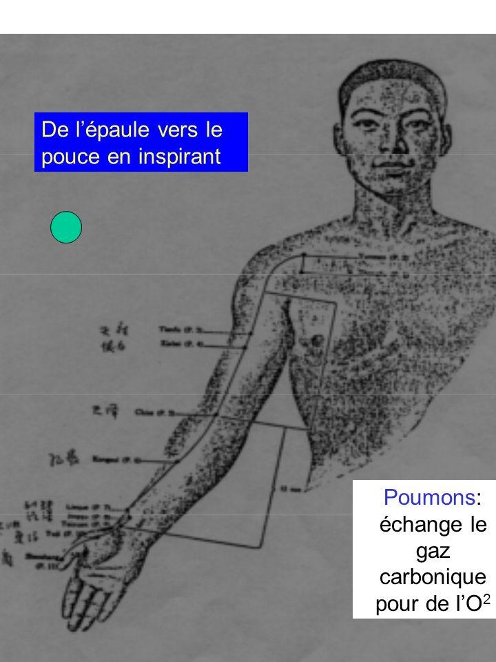 Poumons: échange le gaz carbonique pour de l'O2