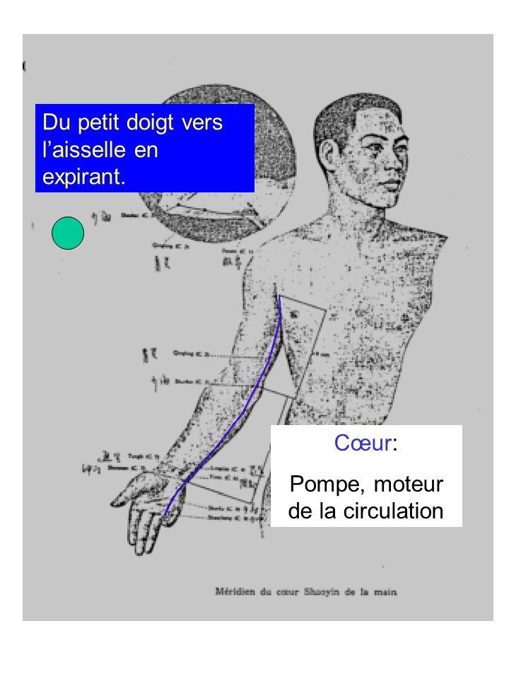 Pompe, moteur de la circulation