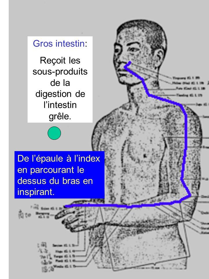 Reçoit les sous-produits de la digestion de l'intestin grêle.