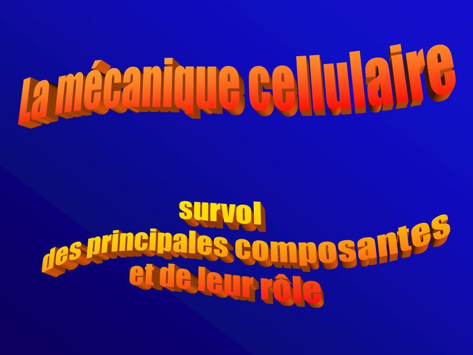 La mécanique cellulaire