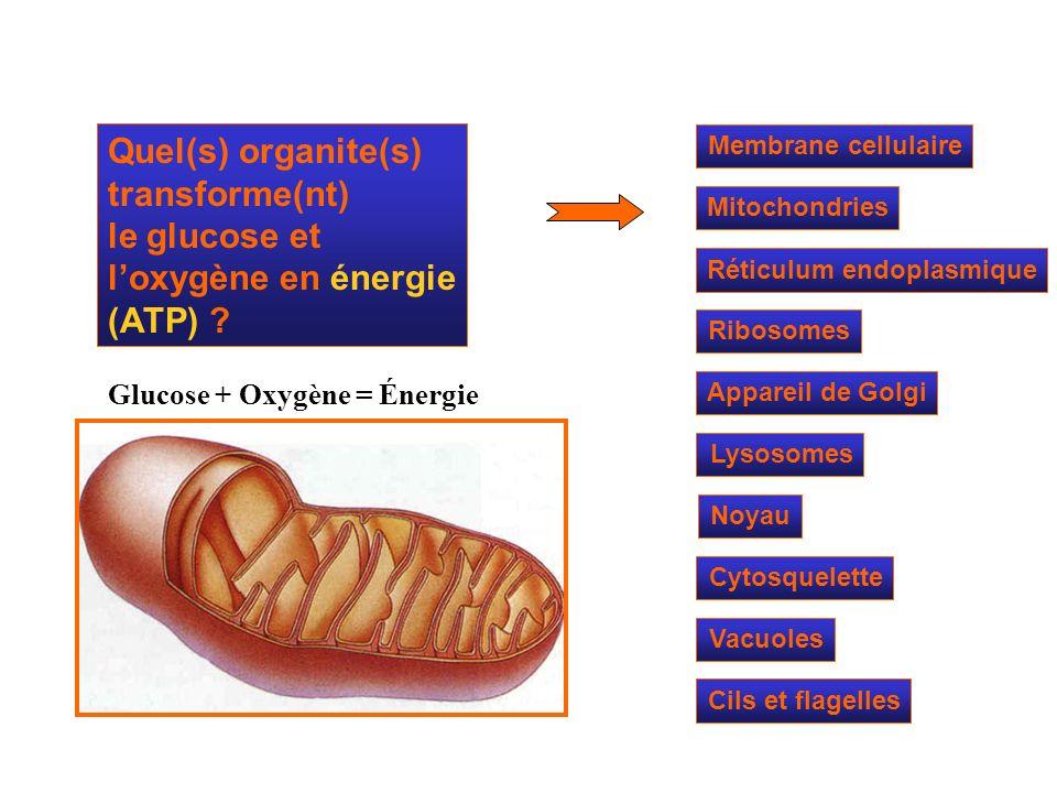 Quel(s) organite(s) transforme(nt)