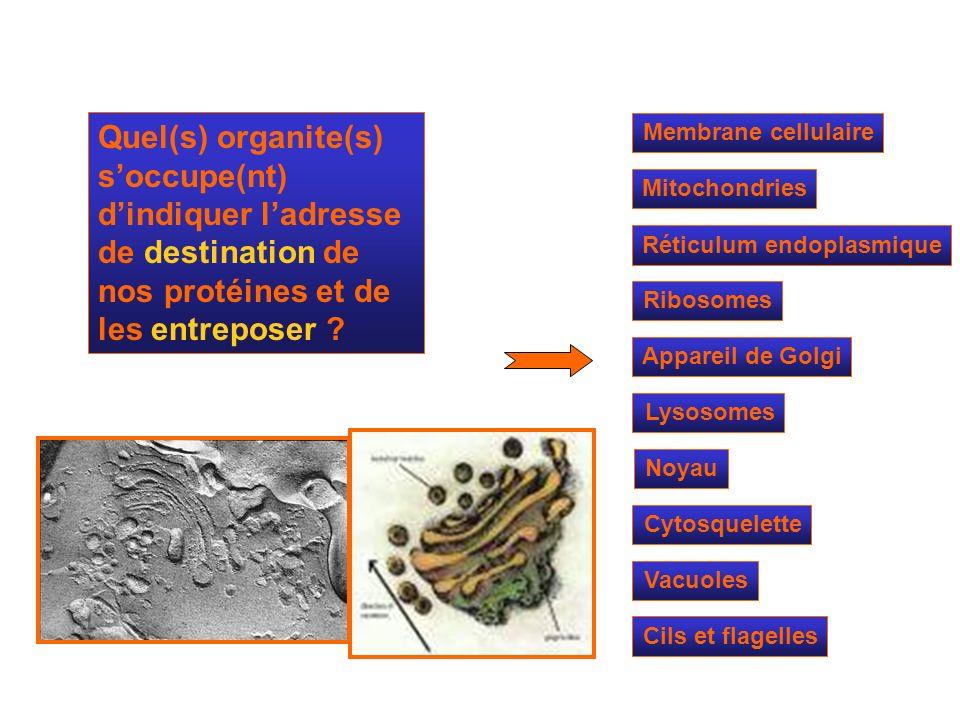 Quel(s) organite(s) s'occupe(nt) d'indiquer l'adresse de destination de nos protéines et de les entreposer