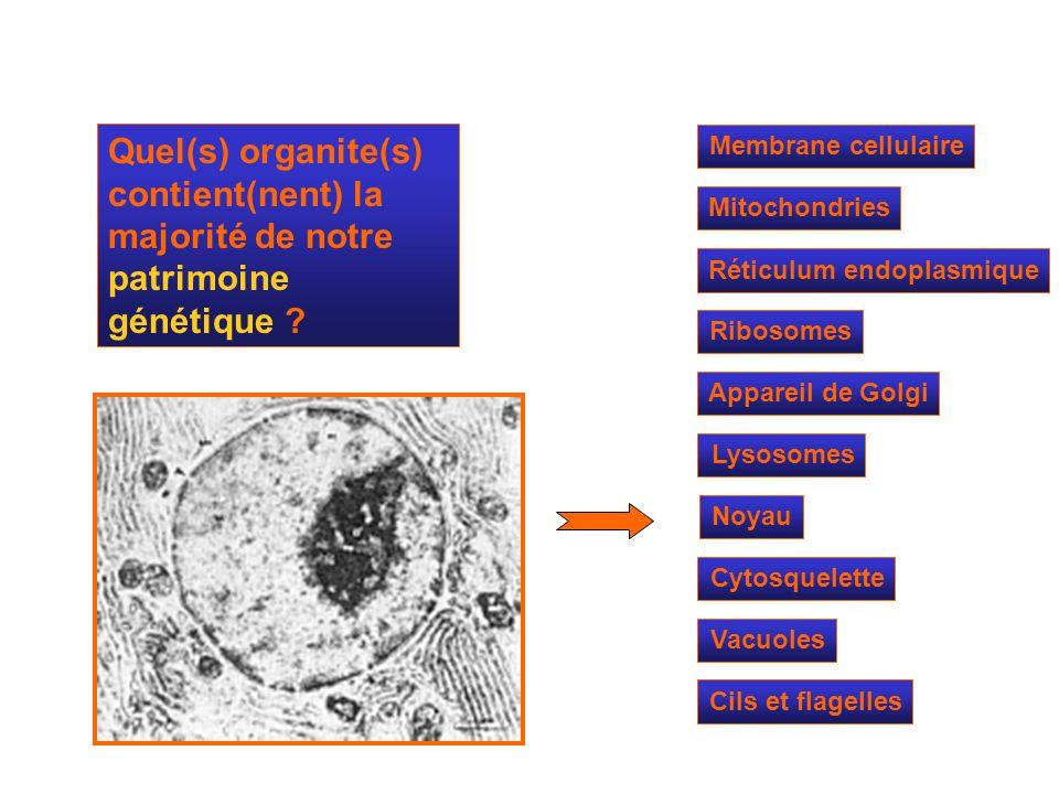 Quel(s) organite(s) contient(nent) la majorité de notre patrimoine génétique