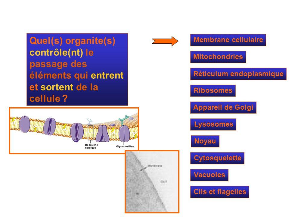 Quel(s) organite(s) contrôle(nt) le passage des éléments qui entrent et sortent de la cellule
