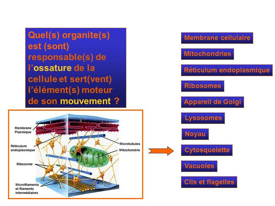 Quel(s) organite(s) est (sont) responsable(s) de l'ossature de la cellule et sert(vent) l'élément(s) moteur de son mouvement