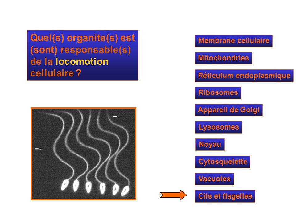 Quel(s) organite(s) est (sont) responsable(s) de la locomotion cellulaire