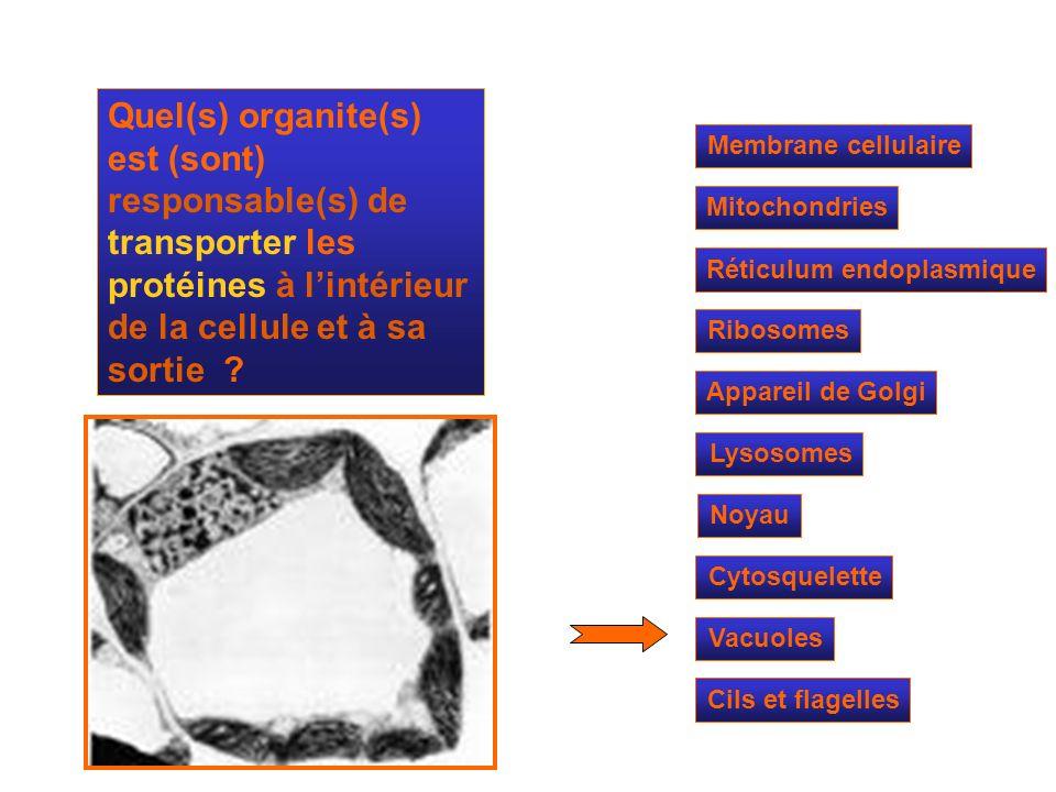 Quel(s) organite(s) est (sont) responsable(s) de transporter les protéines à l'intérieur de la cellule et à sa sortie