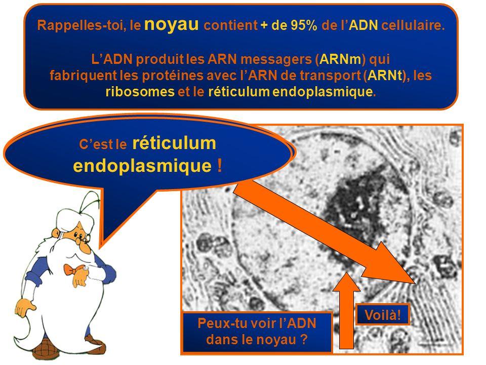 Rappelles-toi, le noyau contient + de 95% de l'ADN cellulaire.