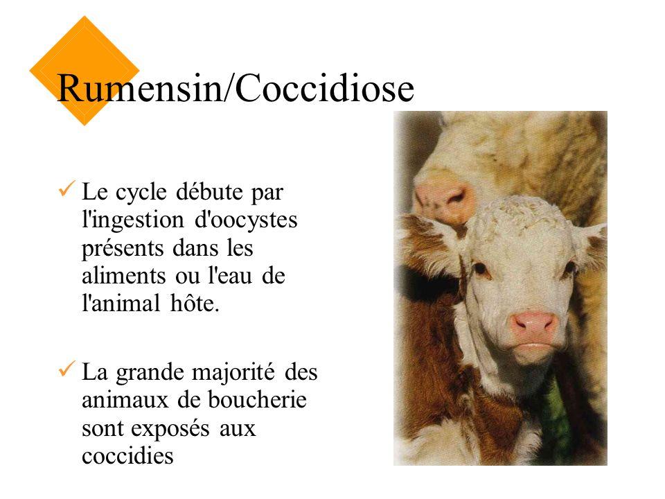 Rumensin/Coccidiose Le cycle débute par l ingestion d oocystes présents dans les aliments ou l eau de l animal hôte.