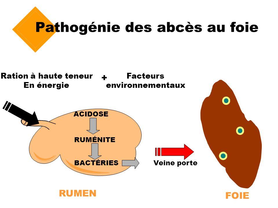 Pathogénie des abcès au foie