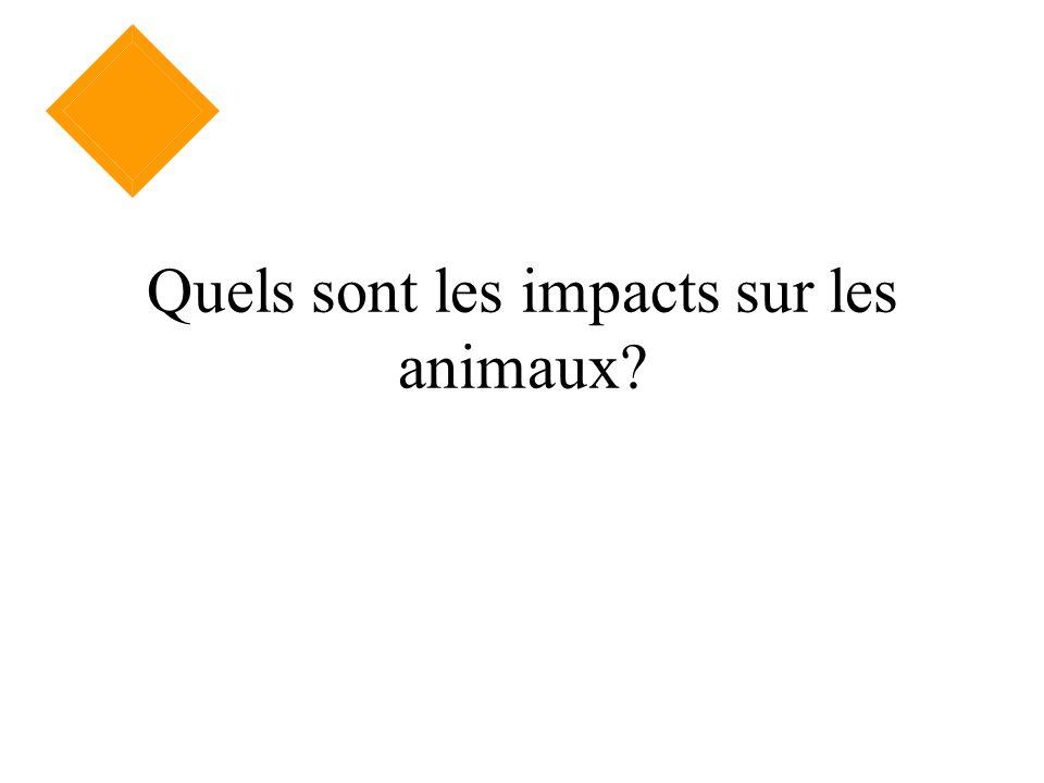 Quels sont les impacts sur les animaux