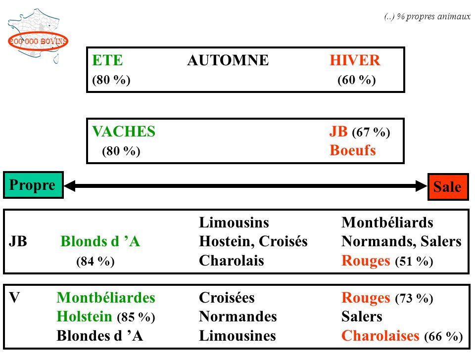 Limousins Montbéliards