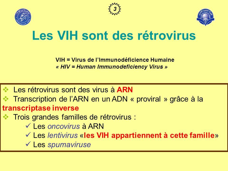 Les VIH sont des rétrovirus