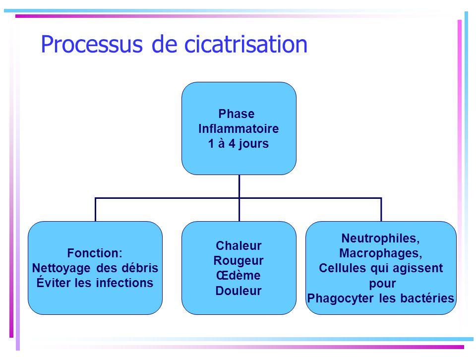 Processus de cicatrisation