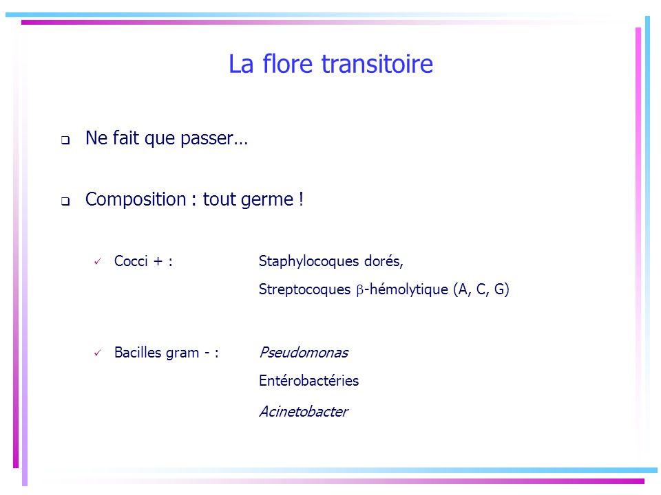 La flore transitoire Ne fait que passer… Composition : tout germe !
