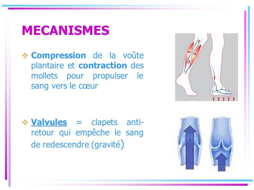 MECANISMES Compression de la voûte plantaire et contraction des mollets pour propulser le sang vers le cœur.
