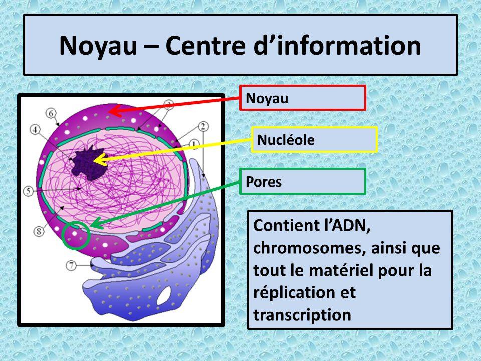 Noyau – Centre d'information