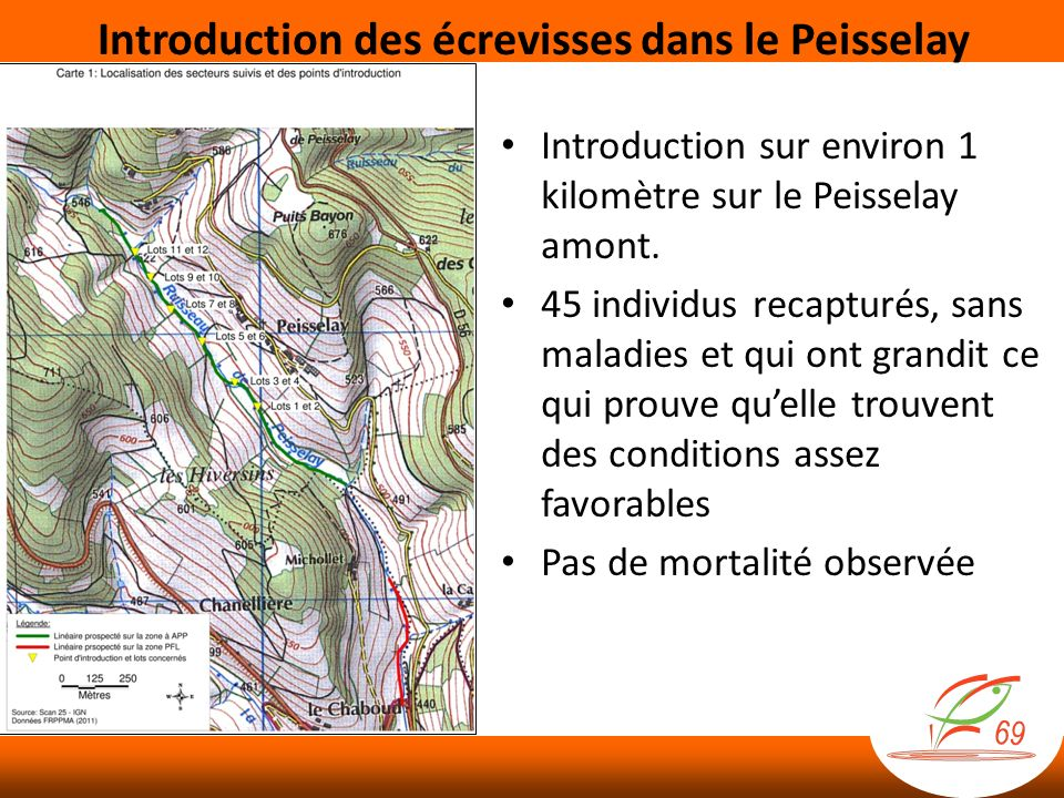 Introduction des écrevisses dans le Peisselay
