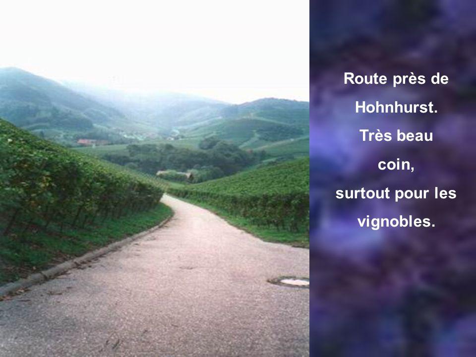 Route près de Hohnhurst. Très beau coin, surtout pour les vignobles.