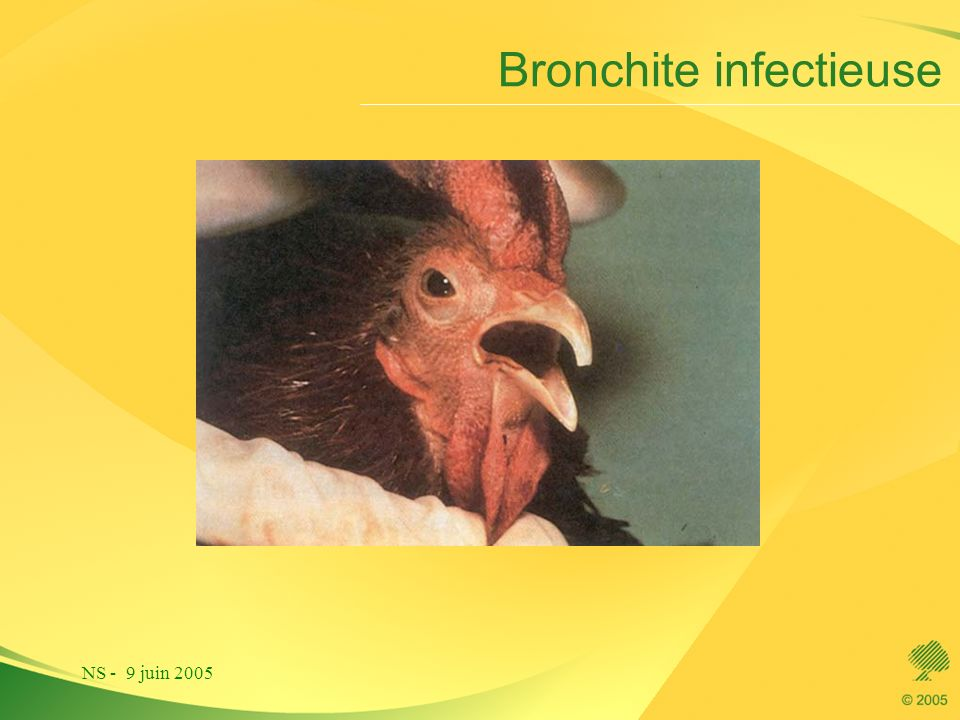 Bronchite infectieuse