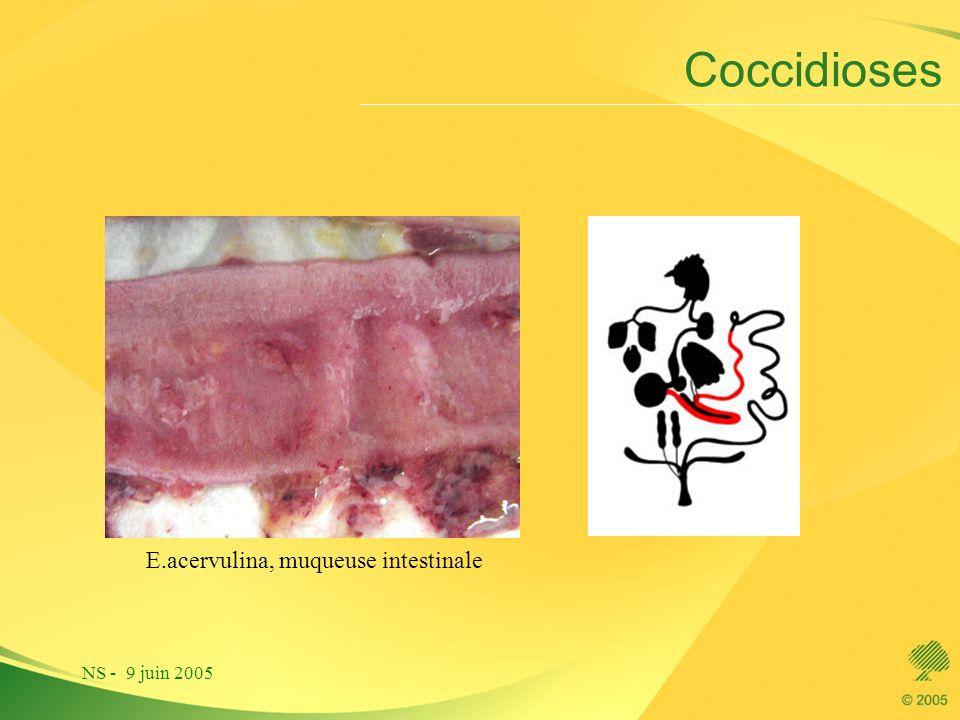 Coccidioses E.acervulina, muqueuse intestinale NS - 9 juin 2005